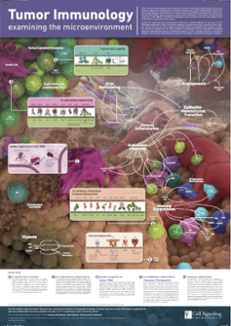 2016-02-Science_Tumor_Immunology_Poster.png