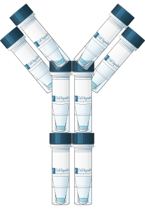 CST tube