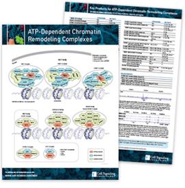 ATP-Dependent Chromatin Remodeling