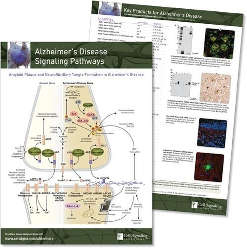 Alzheimers pathway handout