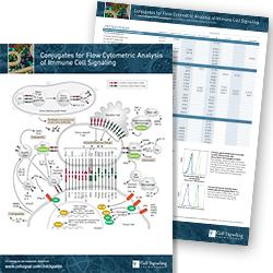 Conjugates Flow Analysis pathway handout