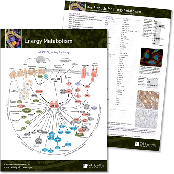 Energy pathway handout