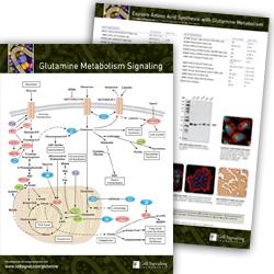 Glutamine Metabolism pathway handout