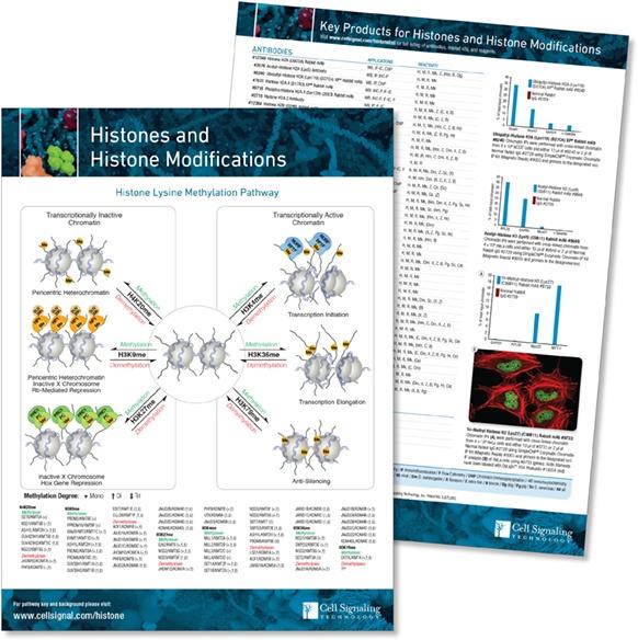 Histones pathway handout