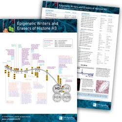 Epigenetics Histone H3