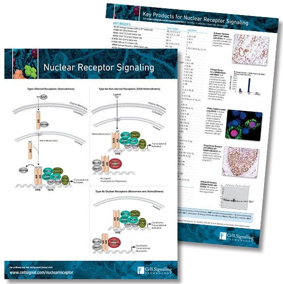 Nuclear Receptor pathway handout