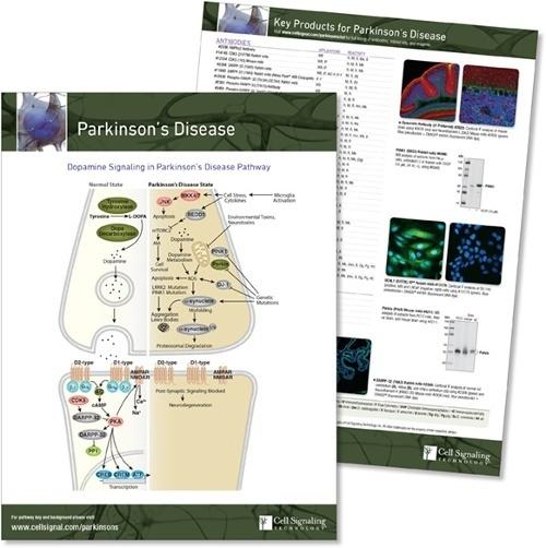 Parkinsons Disease pathway handout