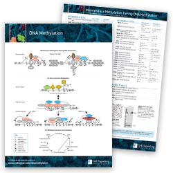 DNA Methylation Pathway Handout