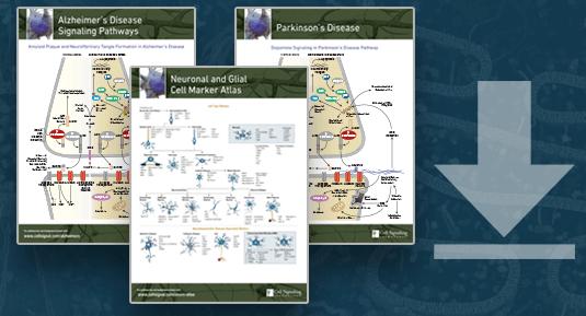 Neurodegeneration Pathway Handout Download