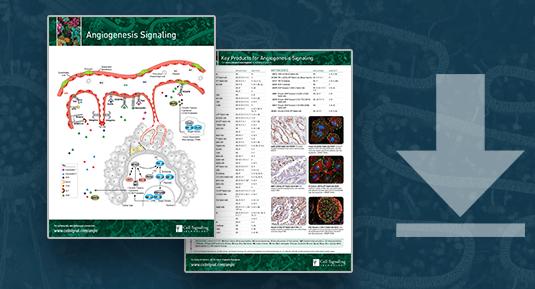 18-CEL-070 EMT Angiogenesis Form Image