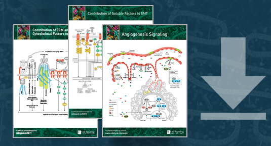 Download your Pathways: Tumor Angiogenesis Signaling, Contribution of ECM to EMT, Contribution of Soluble Factors to EMT