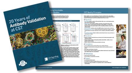 validation brochure thumbnail