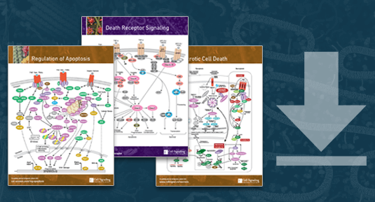 Programmed Cell Death Pathways